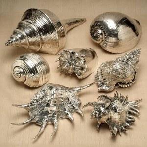 seashellcollection